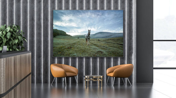 Horse fine wall art photos for sale - buy online at domus