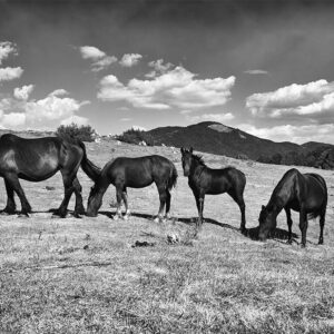 Black horses pictures for sale online by Enrico Lorenzani